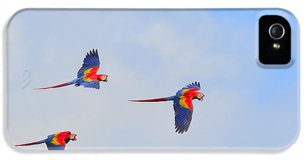Scarlet Macaws IPhone 5 / 5s Case by Tony Beck