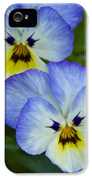 Scowl iPhone 5 Cases - Scowling Pansies iPhone 5 Case by Sean Griffin