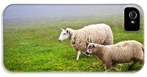 Ewe iPhone 5 Cases - Sheep in misty meadow iPhone 5 Case by Elena Elisseeva