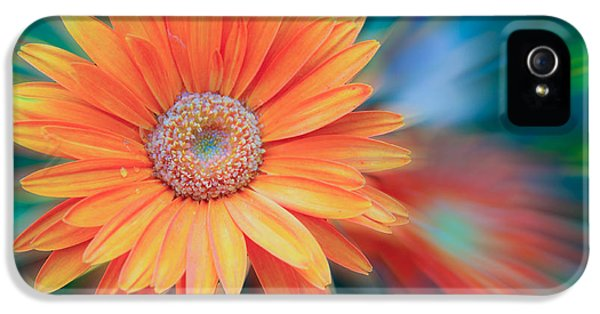 Cone Flowers And Butterflies iPhone 5 Cases - Shining Flower iPhone 5 Case by Steve McKinzie