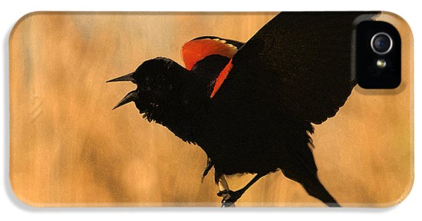 Singing At Sunset IPhone 5 / 5s Case by Betty LaRue