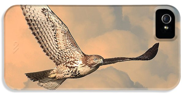 Red Tailed Hawk iPhone 5 Cases - Soaring Hawk iPhone 5 Case by Wingsdomain Art and Photography