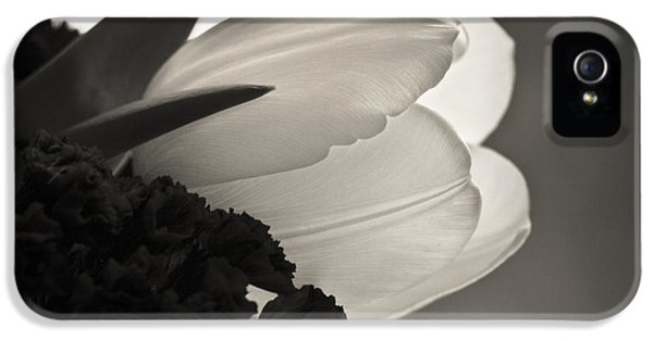Florals iPhone 5 Cases - Softness iPhone 5 Case by Marilyn Hunt