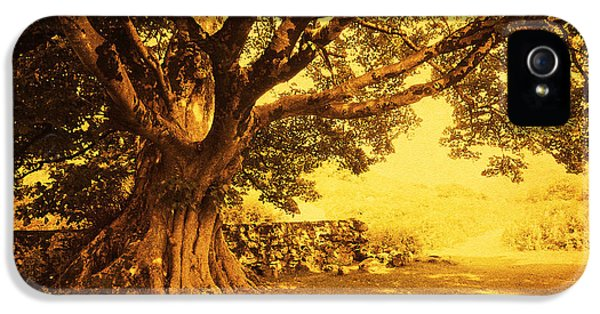 Beautiful Old Tree iPhone 5 Cases - Spiritual Place. Wicklow Mountains. Ireland iPhone 5 Case by Jenny Rainbow