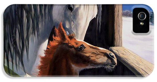 Equine iPhone 5 Cases - Star of Wonder iPhone 5 Case by Jeanne Newton Schoborg