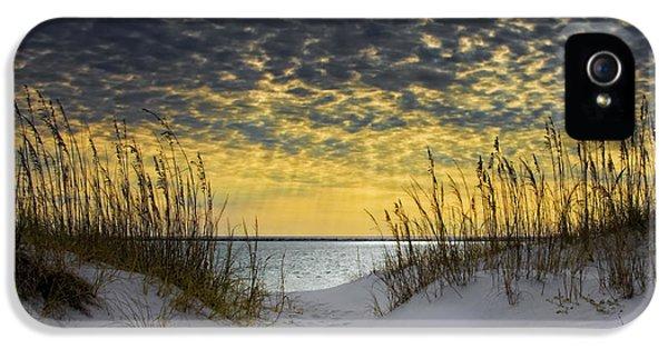Coast iPhone 5 Cases - Sunlit Passage iPhone 5 Case by Janet Fikar