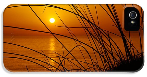 Summertime iPhone 5 Cases - Sunset iPhone 5 Case by Carlos Caetano