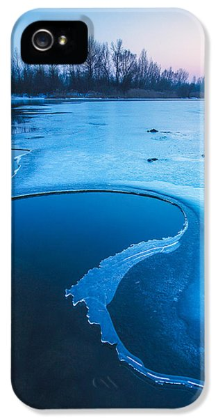 Blue Tree iPhone 5 Cases - Swan iPhone 5 Case by Davorin Mance