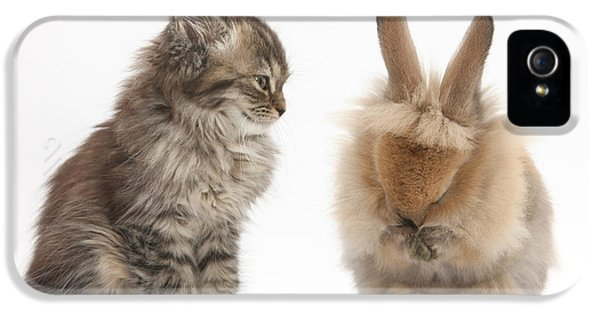 Young Rabbit iPhone 5 Cases - Tabby Kitten With Young Rabbit, Grooming iPhone 5 Case by Mark Taylor