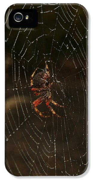 Spider iPhone 5 Cases - The Spider 2 iPhone 5 Case by Ernie Echols