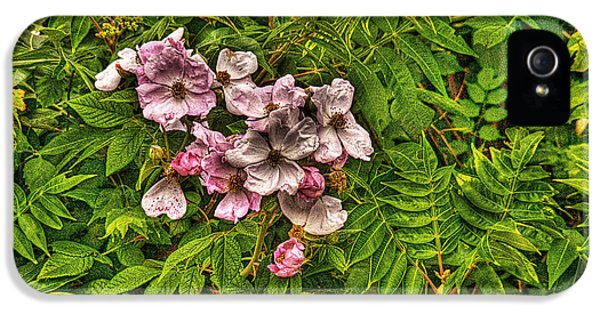 Prickly Wild Rose iPhone 5 Cases - The Wild Rose iPhone 5 Case by William Fields