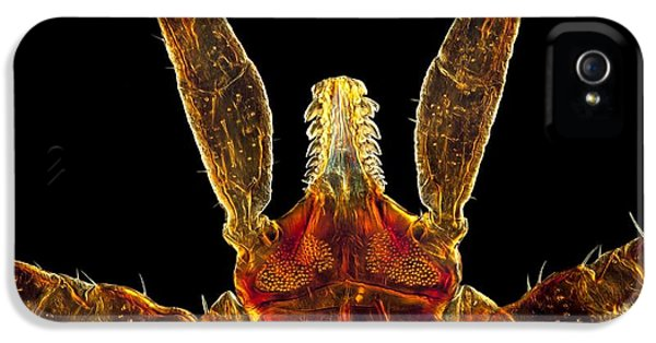 Arthropod iPhone 5 Cases - Tick, Light Micrograph iPhone 5 Case by Jerzy Gubernator