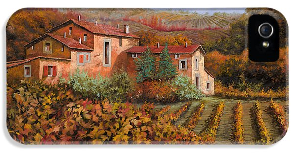 Country iPhone 5 Cases - tra le vigne a Montalcino iPhone 5 Case by Guido Borelli