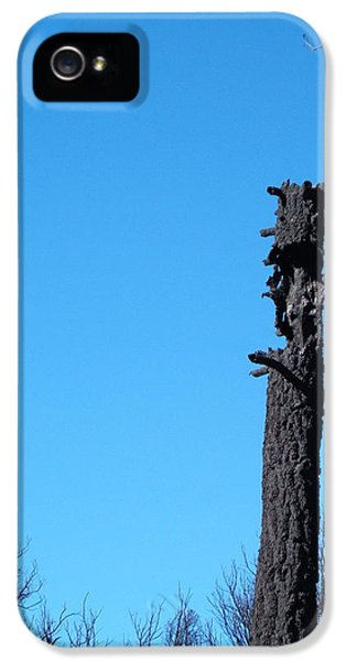 Burn iPhone 5 Cases - Tree Trunk Burned iPhone 5 Case by Naxart Studio
