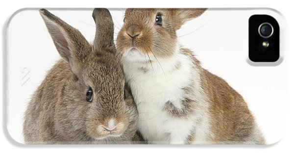 Young Rabbit iPhone 5 Cases - Two Young Rabbits iPhone 5 Case by Mark Taylor