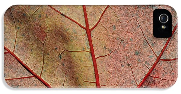 Chlorophyll iPhone 5 Cases - Vascular iPhone 5 Case by Luke Moore