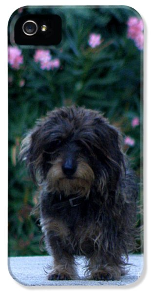 Patiently iPhone 5 Cases - Waiting iPhone 5 Case by Lainie Wrightson