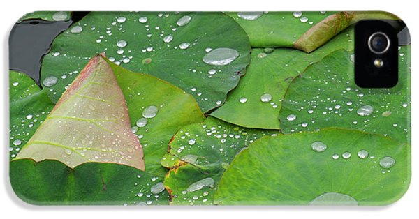 Close Up iPhone 5 Cases - Waterdrops on lotus leaves iPhone 5 Case by Silke Magino