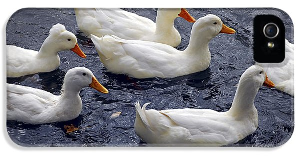 White Ducks IPhone 5 / 5s Case by Elena Elisseeva