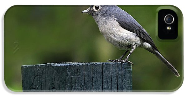 White-eyed Slaty Flycatcher IPhone 5 / 5s Case by Tony Beck