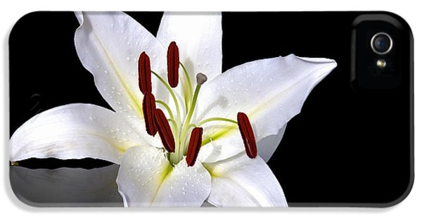 Anniversary iPhone 5 Cases - White lily iPhone 5 Case by Jane Rix