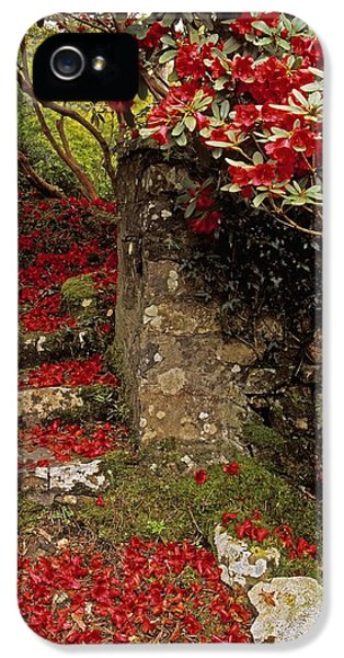 Down In The Garden iPhone 5 Cases - Wild Garden, Rowallane Garden, Co Down iPhone 5 Case by The Irish Image Collection