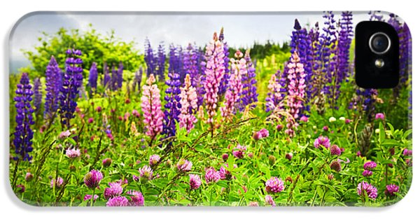 Newfoundland iPhone 5 Cases - Wildflowers in Newfoundland iPhone 5 Case by Elena Elisseeva