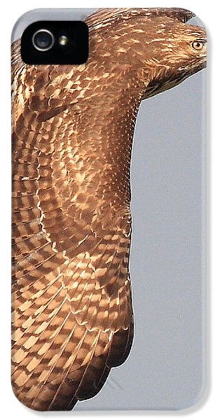Red Tailed Hawk iPhone 5 Cases - Wings of a Red Tailed Hawk iPhone 5 Case by Wingsdomain Art and Photography