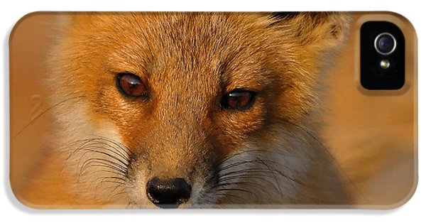 Fox Kits iPhone 5 Cases - Young Fox iPhone 5 Case by William Jobes