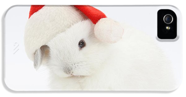 Young Rabbit iPhone 5 Cases - Young Rabbit Wearing A Father Christmas iPhone 5 Case by Mark Taylor