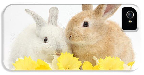 Young Rabbit iPhone 5 Cases - Young Rabbits With Daffodils iPhone 5 Case by Mark Taylor
