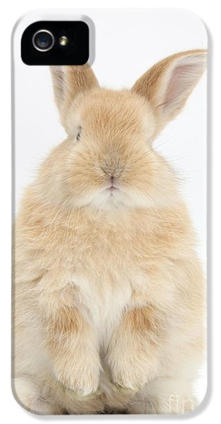 Young Rabbit iPhone 5 Cases - Young Sandy Rabbit iPhone 5 Case by Mark Taylor