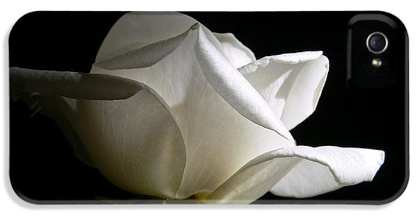 Ivory Rose iPhone 5 Cases -  Evening Light White Rose Flower iPhone 5 Case by Jennie Marie Schell