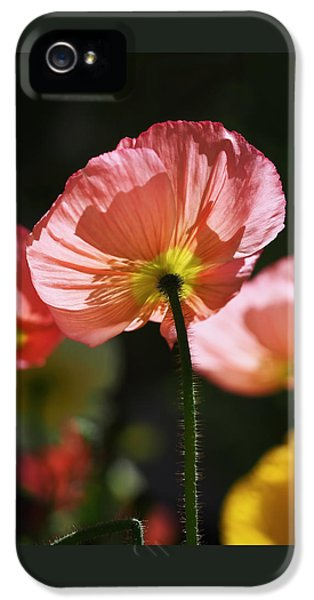 Icelandic Poppies IPhone 5 / 5s Case by Rona Black
