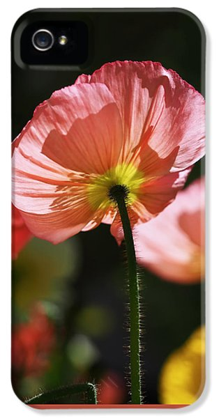 Poppy iPhone 5 Cases -  Icelandic Poppies iPhone 5 Case by Rona Black