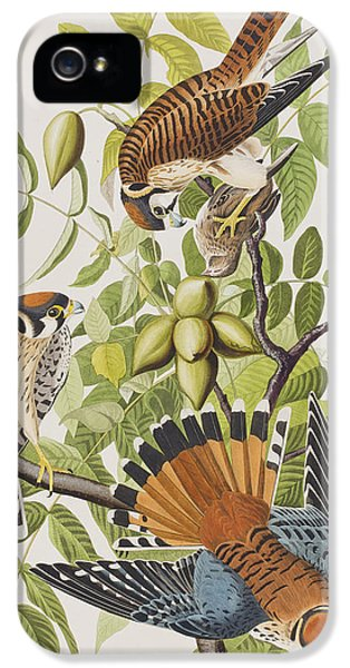 American Sparrow Hawk IPhone 5 / 5s Case by John James Audubon