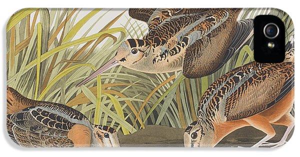 American Woodcock IPhone 5 / 5s Case by John James Audubon
