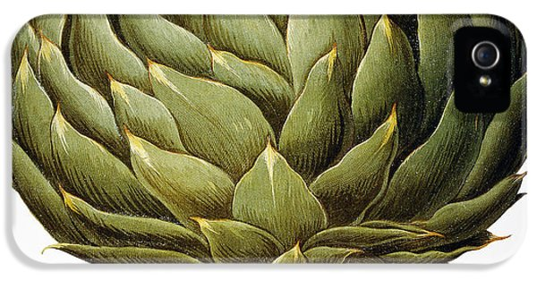 Artichoke, 1613 IPhone 5 / 5s Case by Granger