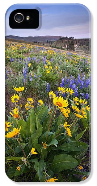 Lupine iPhone 5 Cases - Blue and Gold iPhone 5 Case by Mike  Dawson