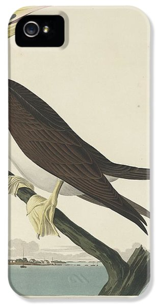 Booby Gannet IPhone 5 / 5s Case by John James Audubon