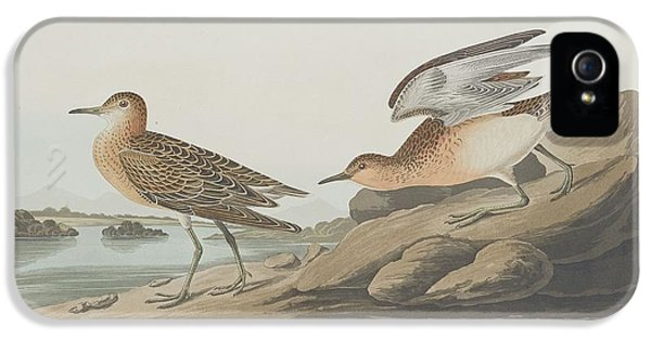 Buff-breasted Sandpiper IPhone 5 / 5s Case by John James Audubon