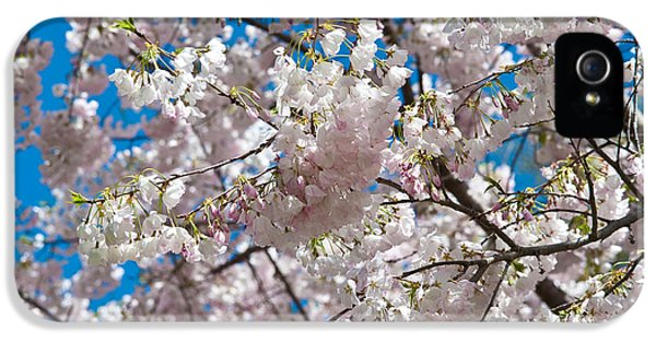 Trees iPhone 5 Cases - Cherry Blossom iPhone 5 Case by Sebastian Musial