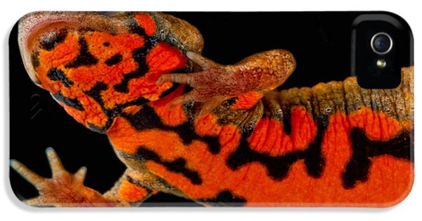 Chuxiong Fire Belly Newt IPhone 5 / 5s Case by Dant� Fenolio