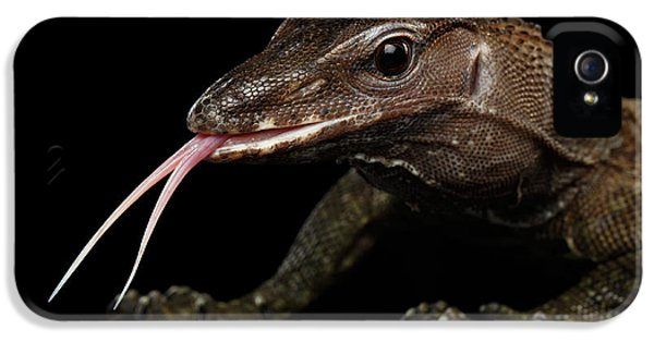 Close-up Varanus Rudicollis Isolated On Black Background IPhone 5 / 5s Case by Sergey Taran