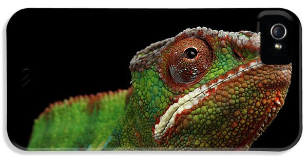 Closeup Head Of Panther Chameleon, Reptile In Profile View Isolated On Black Background IPhone 5 / 5s Case by Sergey Taran
