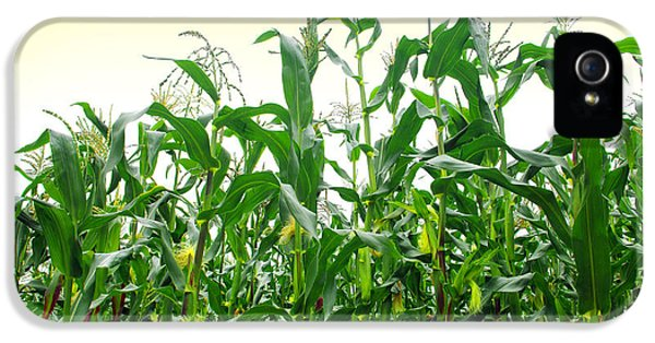 Agriculture iPhone 5 Cases - Corn Field iPhone 5 Case by Carlos Caetano