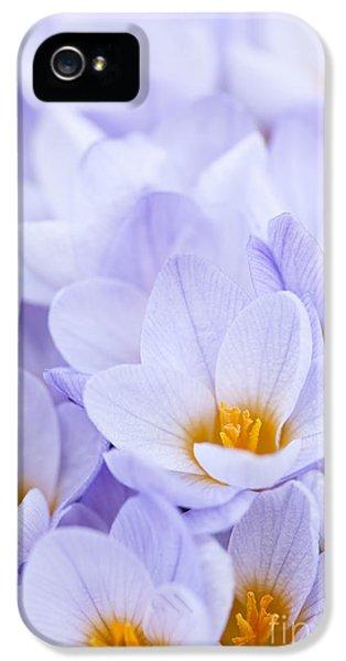 Spring iPhone 5 Cases - Crocus flowers iPhone 5 Case by Elena Elisseeva