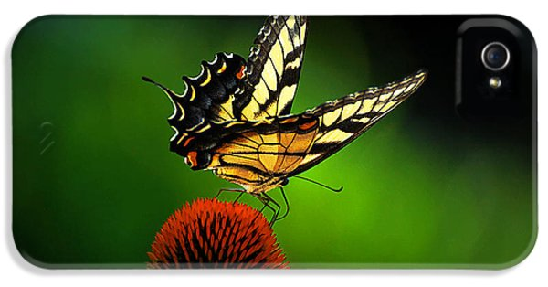 Cone Flowers And Butterflies iPhone 5 Cases - Dining Alone iPhone 5 Case by Lois Bryan