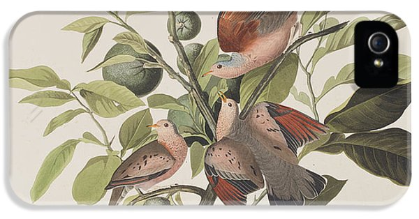 Ground Dove IPhone 5 / 5s Case by John James Audubon