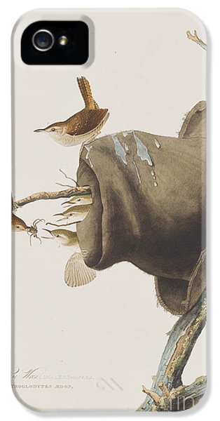 House Wren IPhone 5 / 5s Case by John James Audubon
